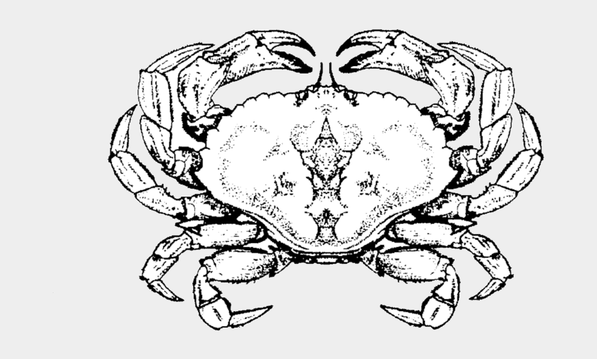 crab clipart outline, Cartoons - Drawing Starfish Crab - Cancer Crab