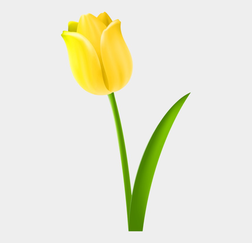 yellow tulip clipart, Cartoons - Tulip Drawing Cut Flowers Petal - Drawing Of Tulip Flower Colour