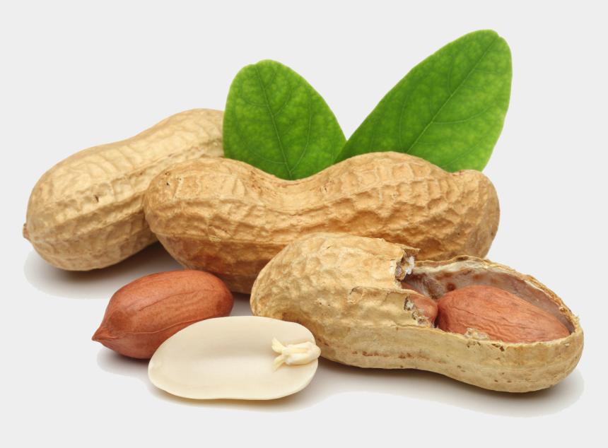 peanut shell clipart, Cartoons - Peanut - Transparent Background Peanut Png