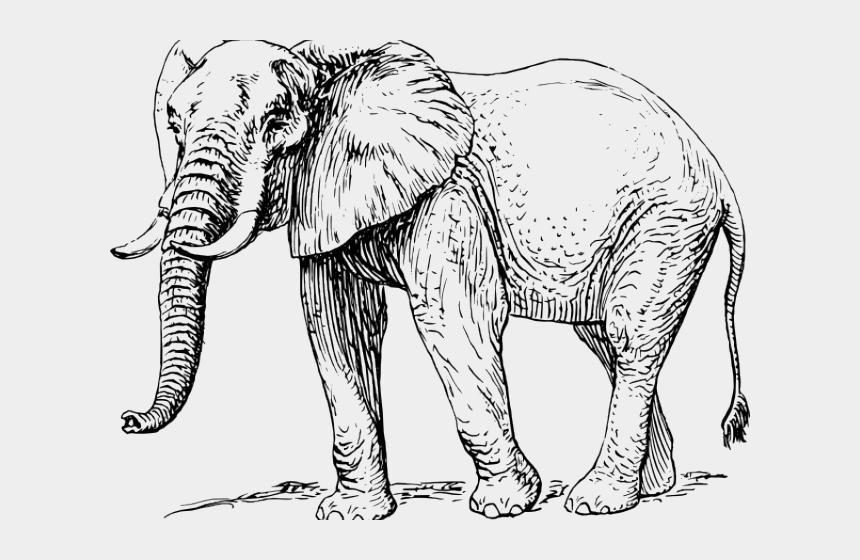 cartoon on net: Cartoon Elephant Trunk Up