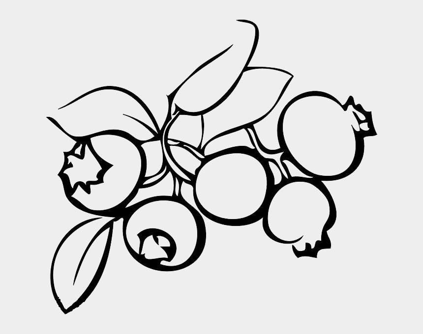 blueberries clipart black and white, Cartoons - Blueberry Clipart Drawn - Blueberry Black And White