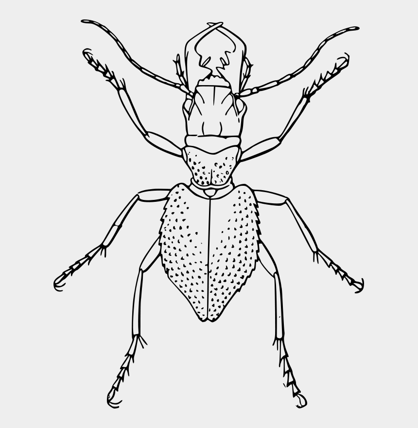 beetle clipart black and white, Cartoons - Beetle Line Art Ant - Line Drawings Of Insects
