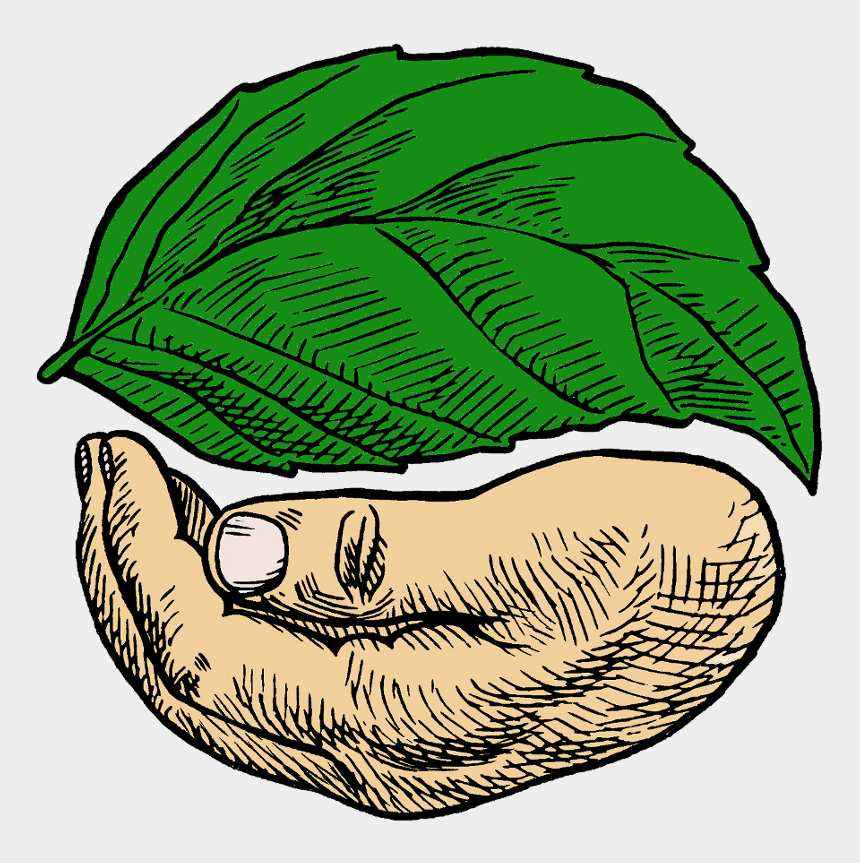 trees and bushes clipart, Cartoons - Sacred Seeds