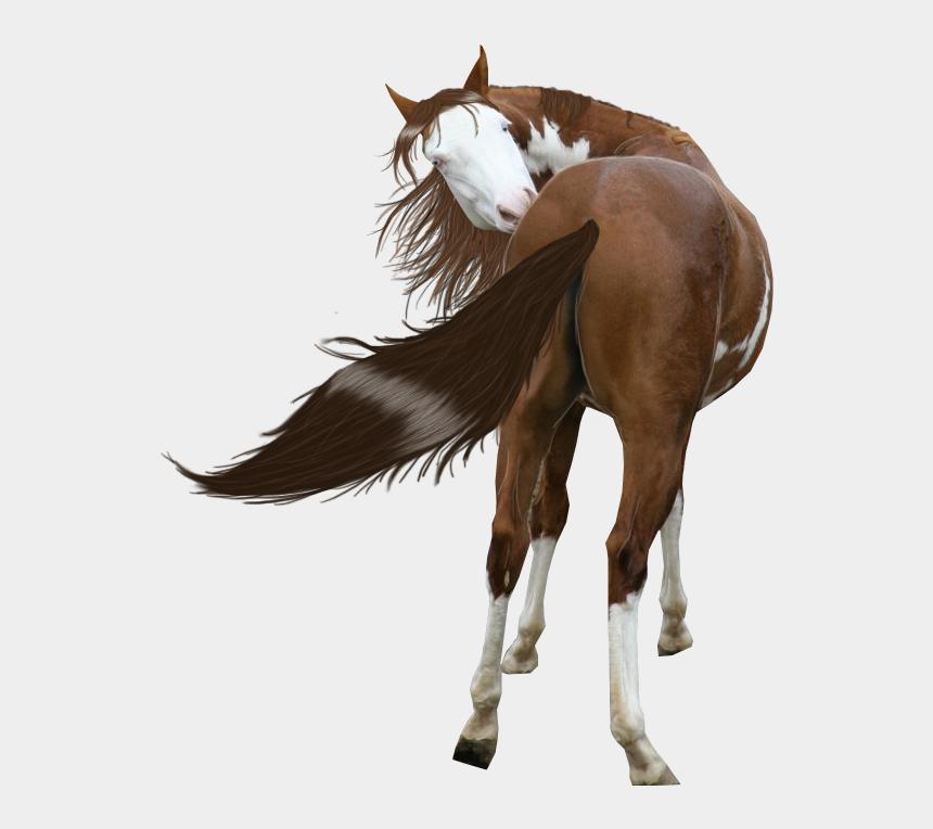 paint horse clipart, Cartoons - Free Download Painted Horse Png Clipart American Paint - Paint Horse Transparent