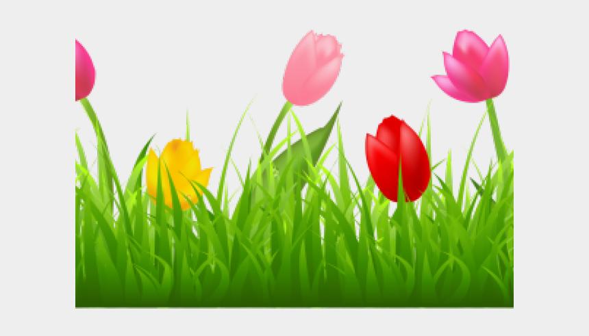 tulips clipart, Cartoons - Tulip Clipart Transparent Background - Tulip Border Clip Art