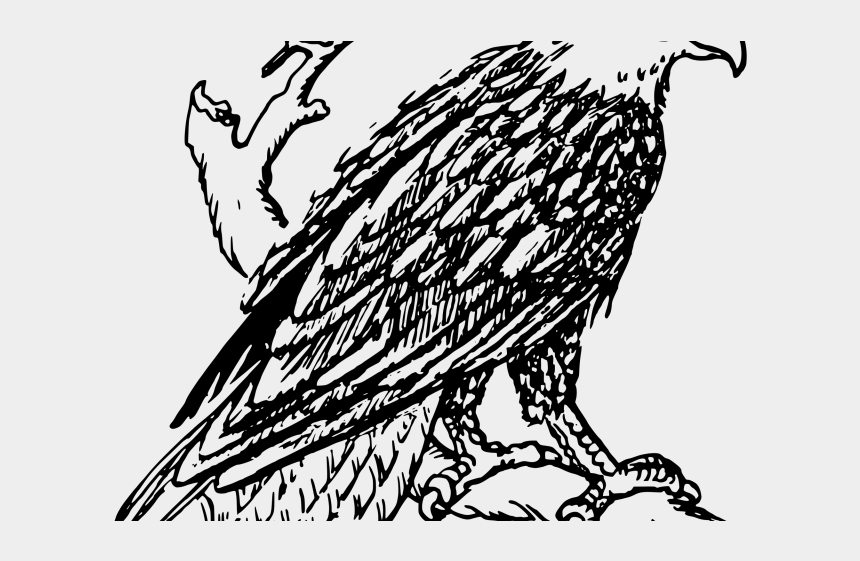 falcon clipart, Cartoons - Peregrine Falcon Clipart Transparent - Black And White Pictures Of Bald Eagles