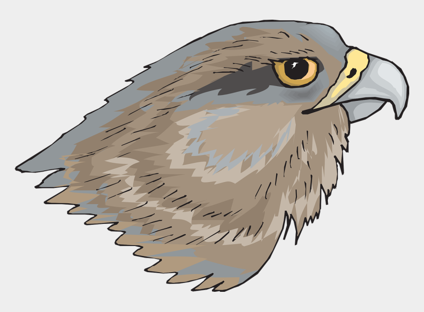 falcon clipart, Cartoons - Peregrine Falcon Clipart Halk - Hawks Head Transparent