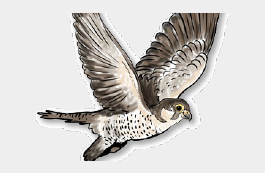 falcon clipart, Cartoons - Peregrine Falcon Clipart Harrier - Portable Network Graphics