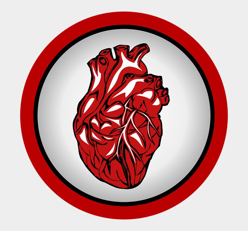 heartbeat clipart, Cartoons - Real Heart Transparent Background