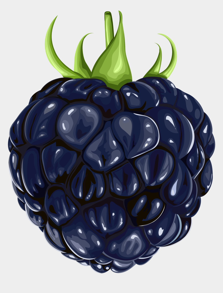 fruits clipart, Cartoons - Fruit Clipart Sketch - Blackberry Clipart Png