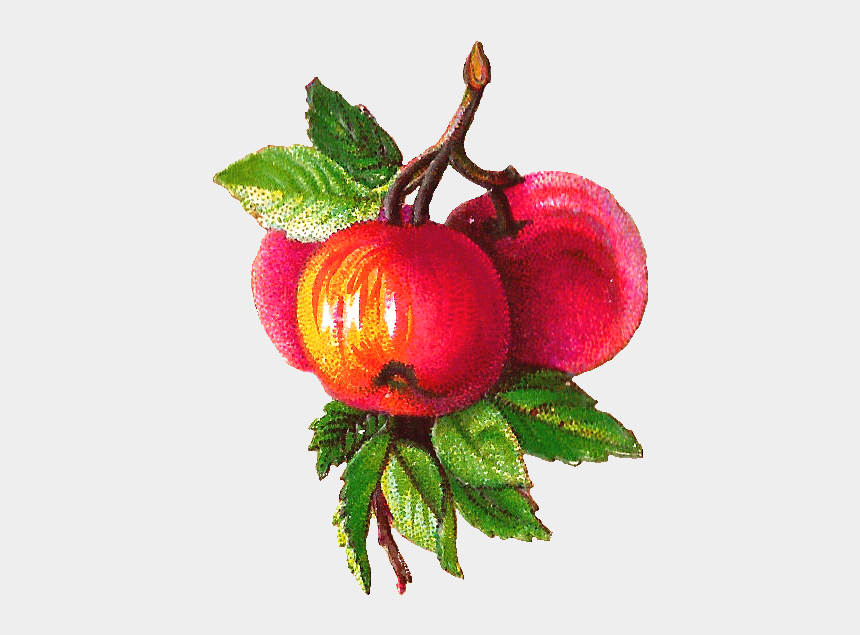fruits clipart, Cartoons - Fruit Clipart Victorian - Vintage Apple Tree Transparent