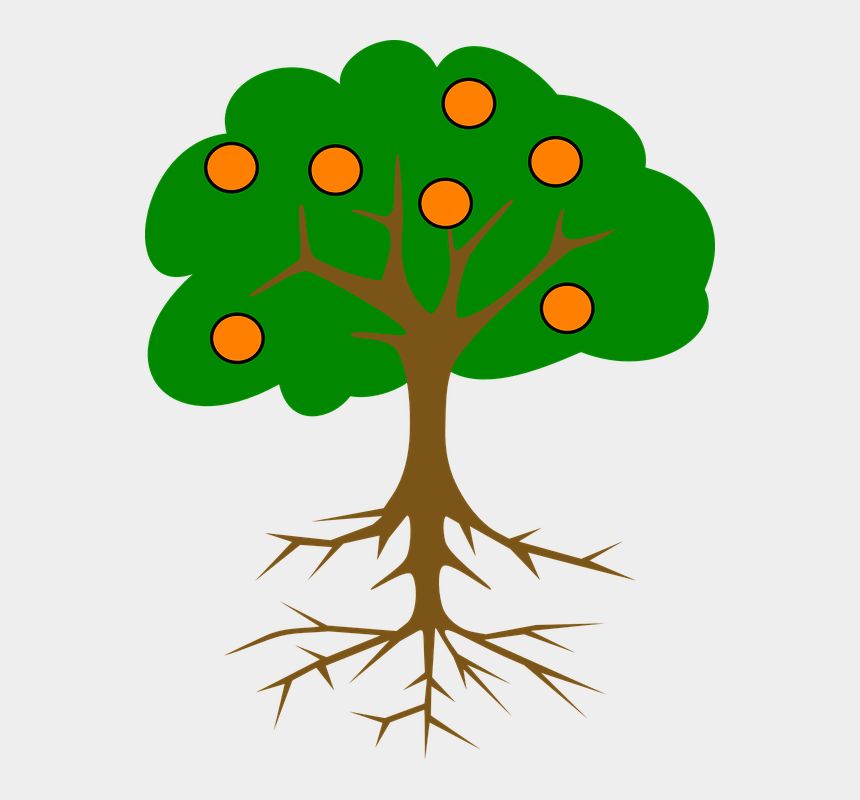 fruits clipart, Cartoons - Tree Oranges Roots Plant Fruit Citrus Food - Part Of Tree Name