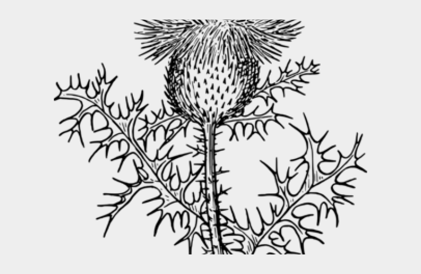 gardening clipart, Cartoons - Weed Clipart Gardener - Thistle Coloring Page