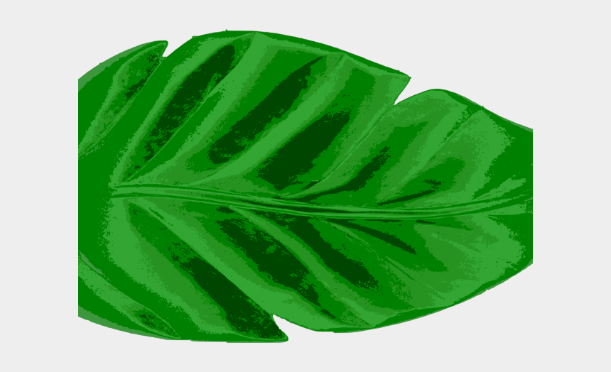 palm tree leaf clipart, Cartoons - Leaves Clipart Tropical - Watercolor Tropical Leaves Png