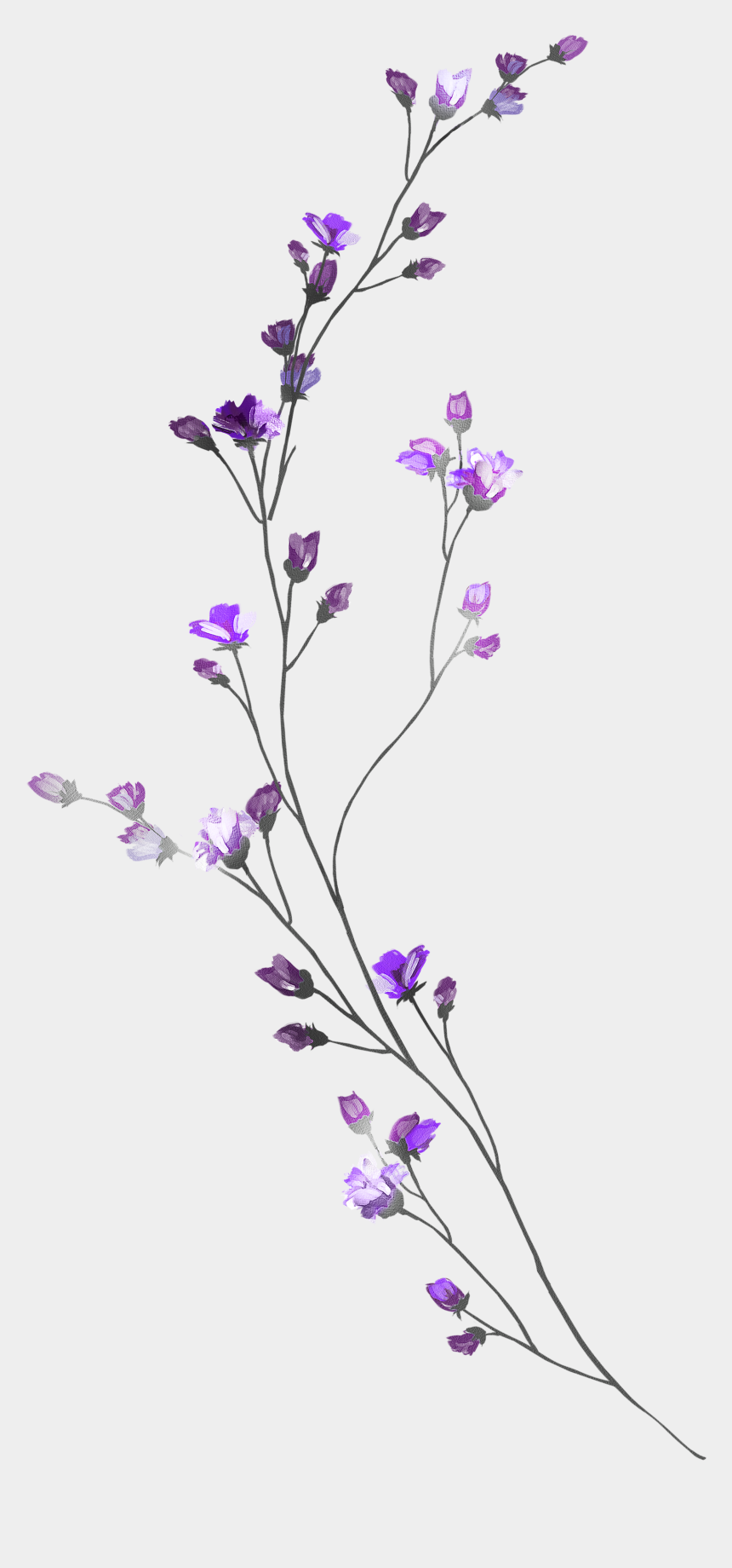 lavendar clipart, Cartoons - Pin By Teresa Benedict On Free Flowers And Leaves In - Watercolor Painting