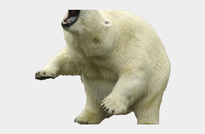 polar animal clipart, Cartoons - Clipart Wallpaper Blink - Polar Bear With Transparent Background