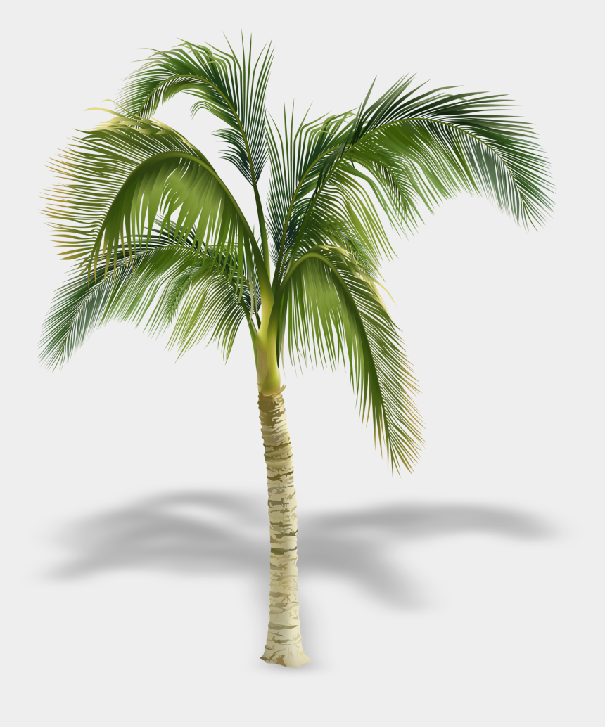 palm tree free clipart, Cartoons - Arecaceae Stock Photography Tree Royalty-free - Palm Tree Free Png