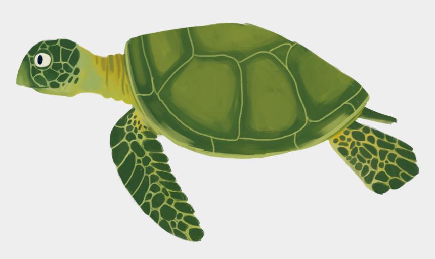 sea turtle clipart images, Cartoons - Sea Turtle Animation - Sea Turtle Cartoon Transparent