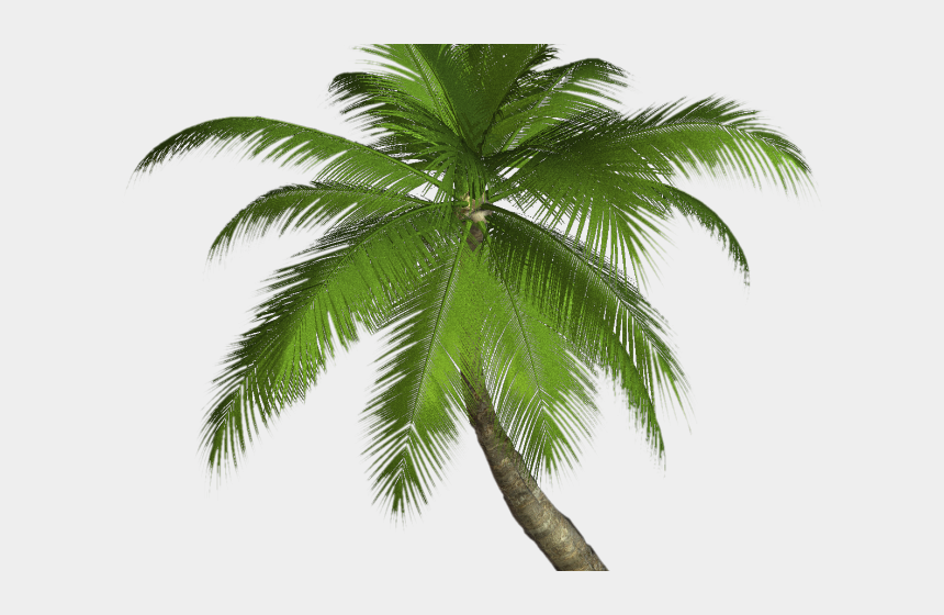 date palm tree clipart, Cartoons - Date Palm Clipart Palmyra Tree - Transparent Palm Trees Png