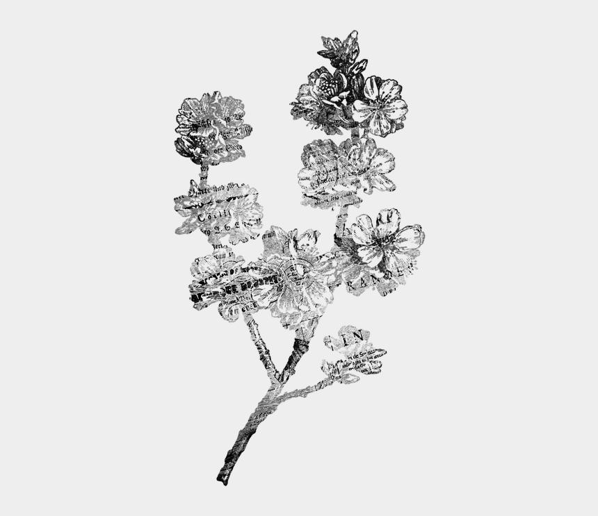 black and white vintage floral clipart, Cartoons - Flower Antique Scrap - Flower Illustration Black And White Png