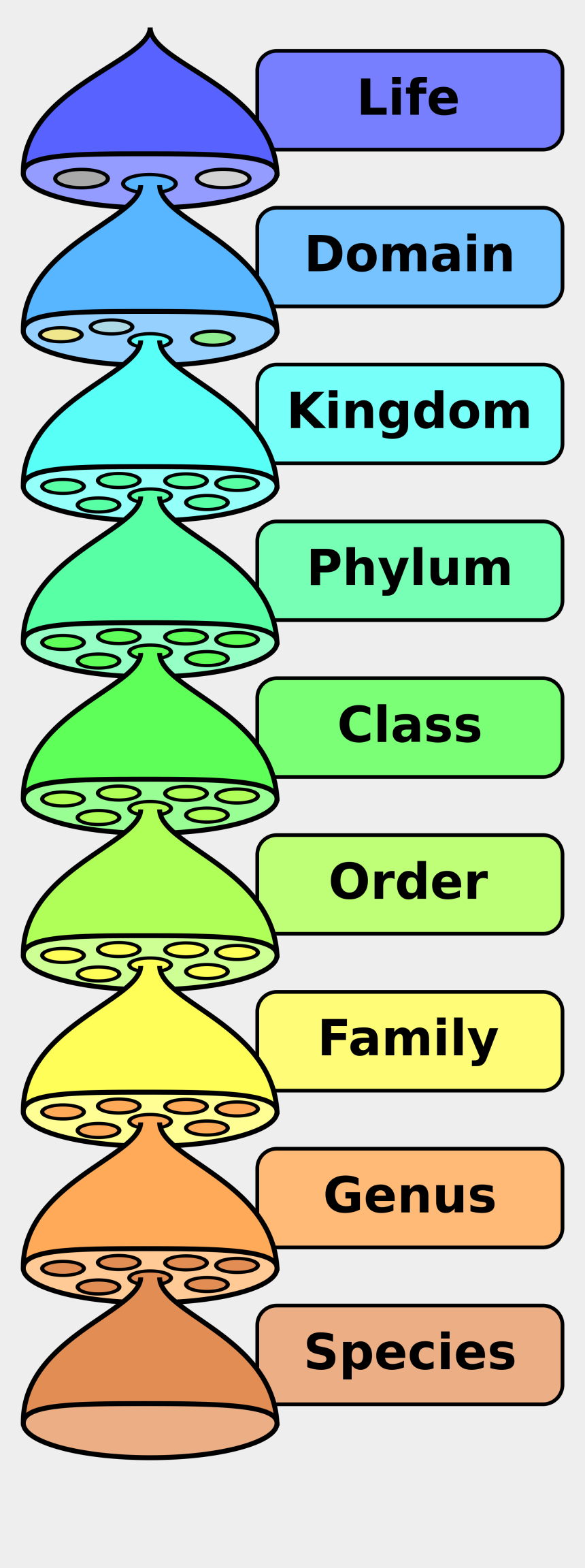 hierarchy clipart, Cartoons - Classification Of Living Things