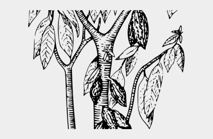 Coffee Plant Clipart Cocoa Bean Cocoa Bean Tree Drawing Cliparts Cartoons Jing Fm