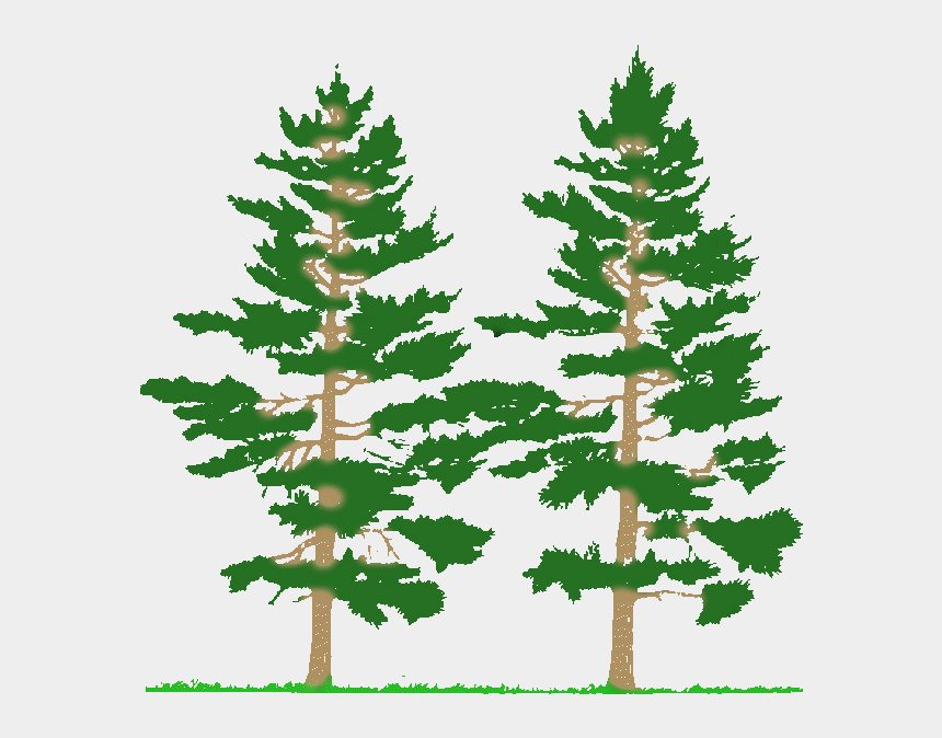 cnc clipart, Cartoons - Cnc Pine Tree Scenery Clipart & Clip Art Images - Types Of Forest Fires