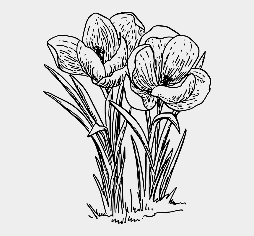 flowers clipart black and white, Cartoons - Crocus Flower Plant Bulb Spring Blossom Floral - Crocus Clip Art Black And White