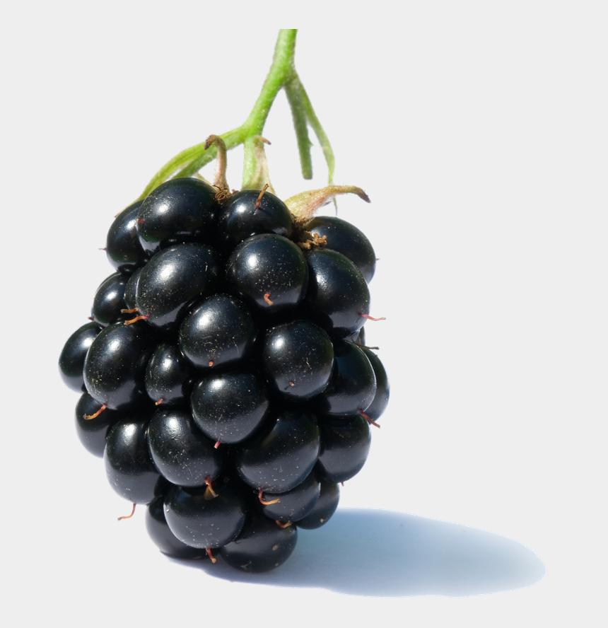 grape clipart, Cartoons - Transparent Grapes One - Blackberry Fruit