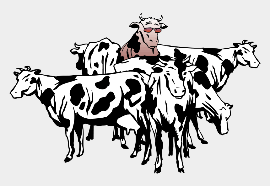 cows clipart, Cartoons - British White Cattle Beef Cattle Sheep Herd Clip Art - Herd Of Cattle Clipart