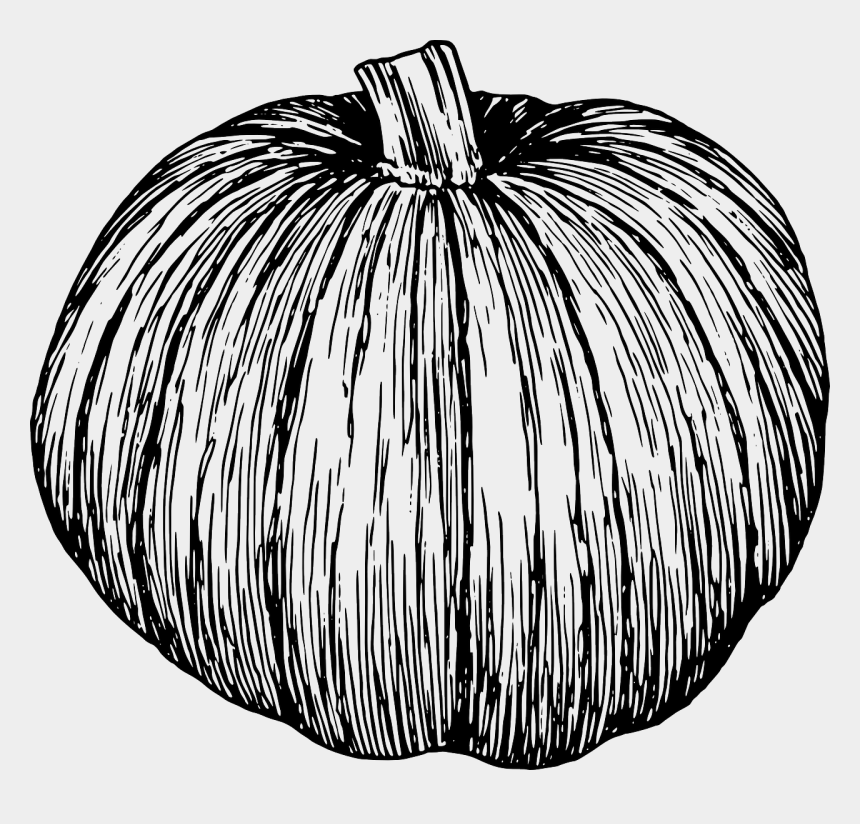 chalk pumpkin clipart, Cartoons - Pumpkin, Pumpkin Vine, Autumn Pumpkin, Cucurbita Pepo - Pumpkin Transparent Black
