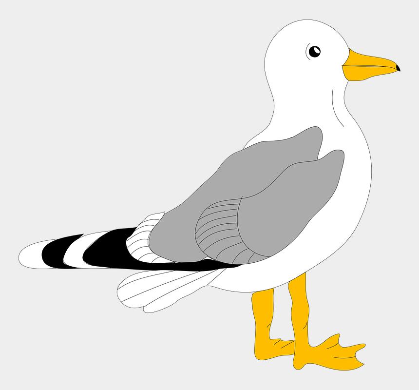 pelican clipart, Cartoons - Pelican Svg Clip Arts 600 X 530 Px - Sea Gull Clip Art