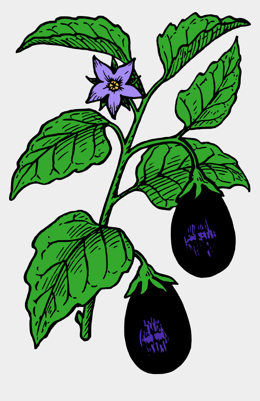 hope clipart, Cartoons - Eggplant - Drawing Images Of Brinjal Plant