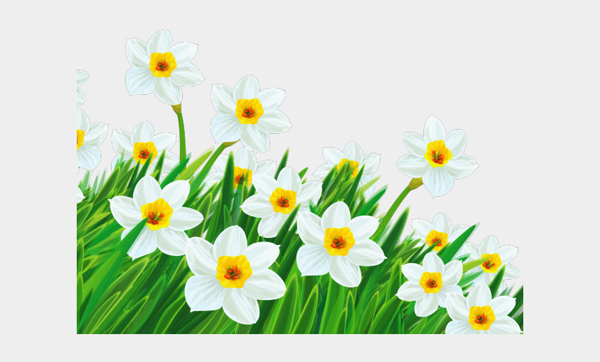 easter island clipart, Cartoons - Easter Flower Clipart Daffodil - Spring Flowers Transparent Background