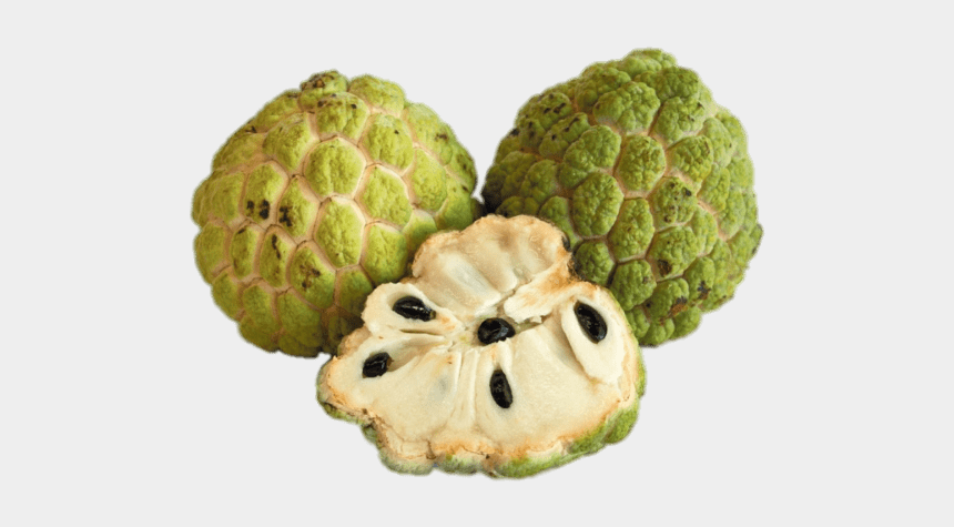 custard apple clipart, Cartoons - Download - Custard Apple Vs Sweet Apple