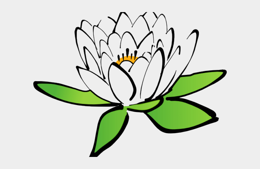 flower clipart no background, Cartoons - Flower Clipart Transparent Background - Lotus Drawing With Colour