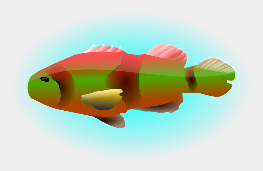 colourful fish clipart, Cartoons - Portable Network Graphics