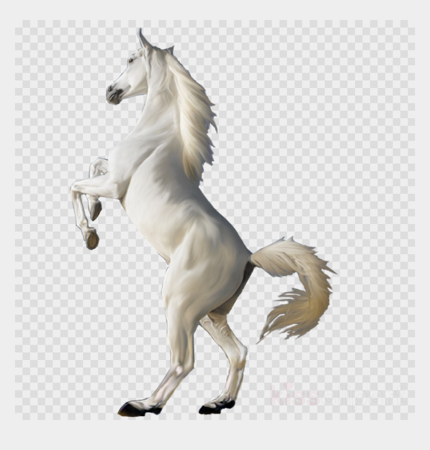horse png clipart, Cartoons - White Horse Png