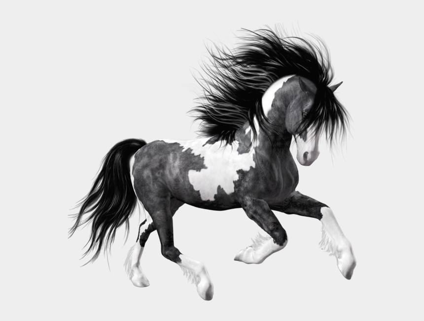 white horse clipart, Cartoons - Black And White Horse Png