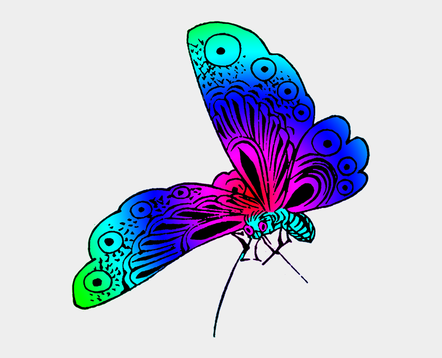 butterfly garden clipart, Cartoons - Strange Colored Butterfly Image, Beautiful Butterfly - Different Color Of Butterfly