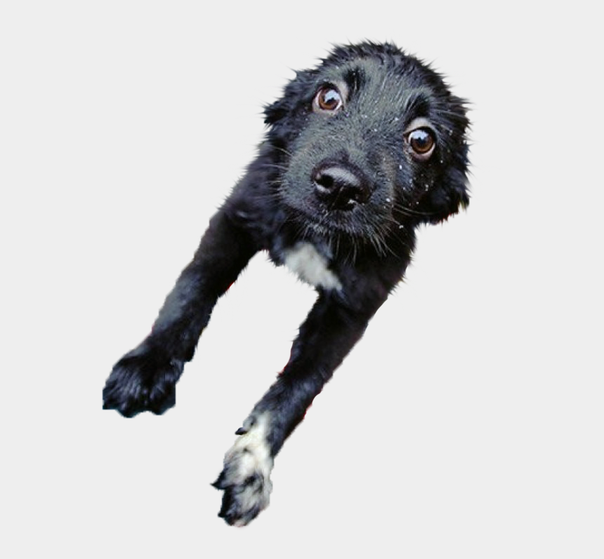 wet dog clipart, Cartoons - Here's One More Cutout - Dog Catches Something