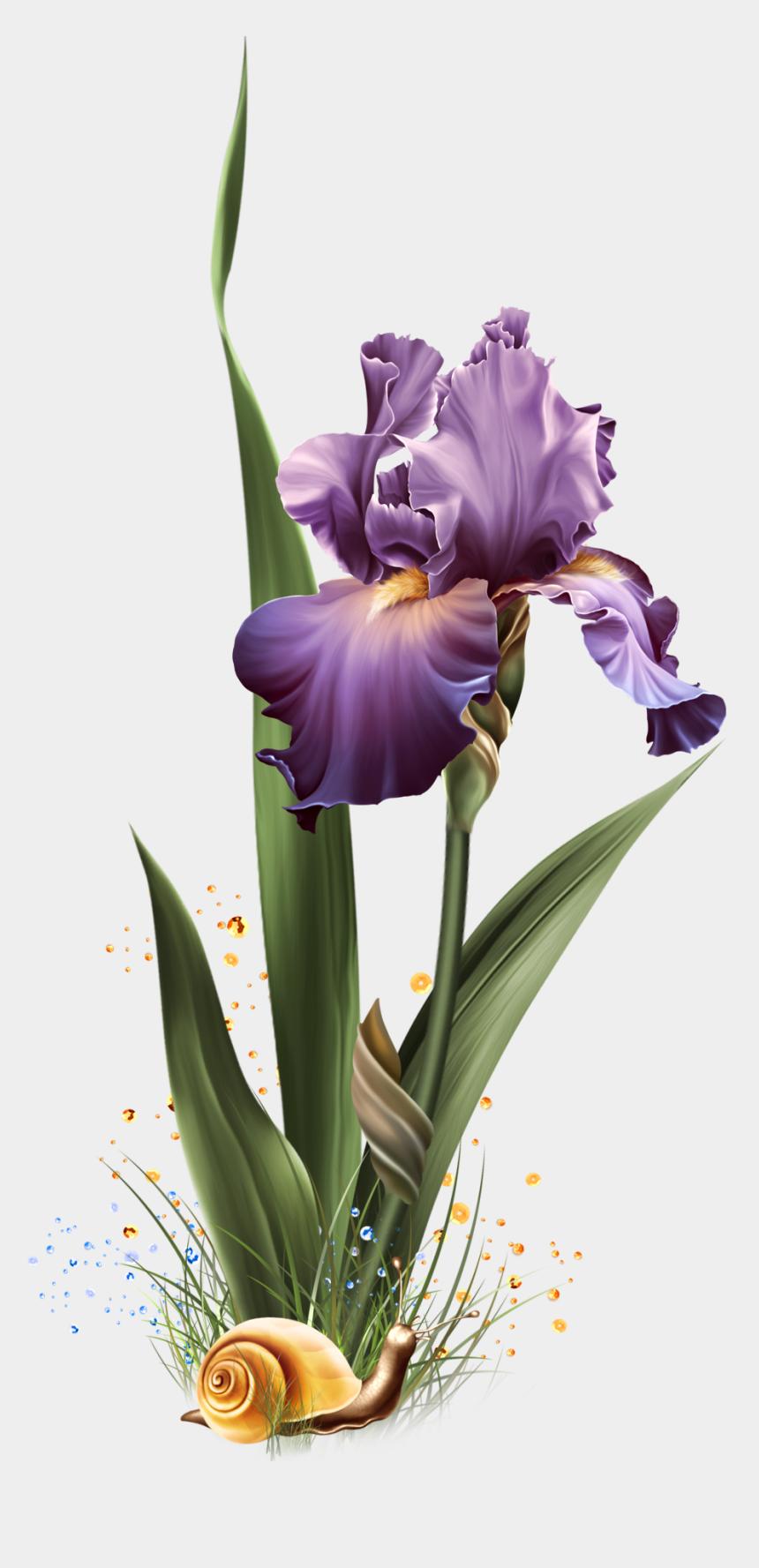 iris flower clipart, Cartoons - Image Du Blog Zezete2 - Portable Network Graphics