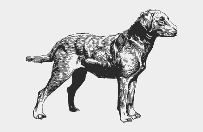 lab dog clipart, Cartoons - Labrador Retriever Clipart Hunting Dog - Chesapeake Bay Retriever Clip Art