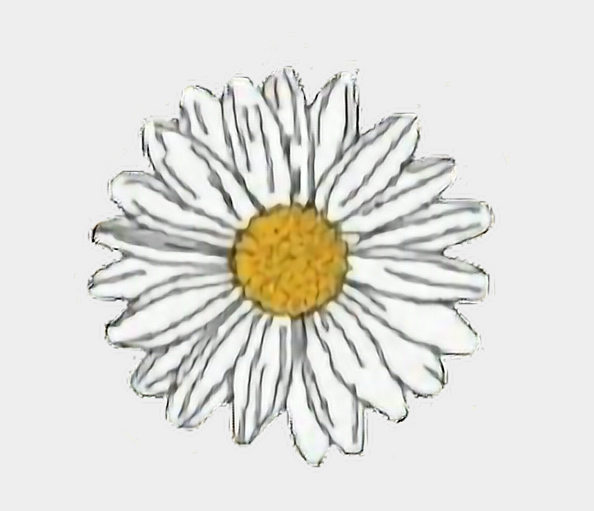 graphic regarding Aesthetic Printable Stickers known as flower #yellow #white #daisy #aesthetic #freetoedit