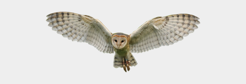barn owl clipart, Cartoons - Transparent Background Owl Png