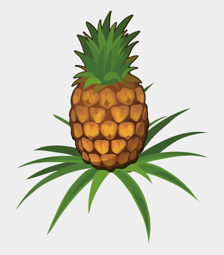 pineapple clipart black and white, Cartoons - Juice Pineapple Fruit Clip Art Cartoon Ⓒ - Pineapple Plant Cartoon
