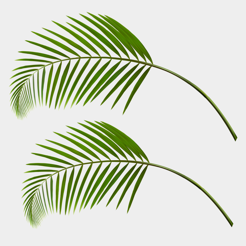 fall leaf clipart, Cartoons - Transparent Palm Leaves Png Clipart , Png Download - Palm Tree Leaf Png
