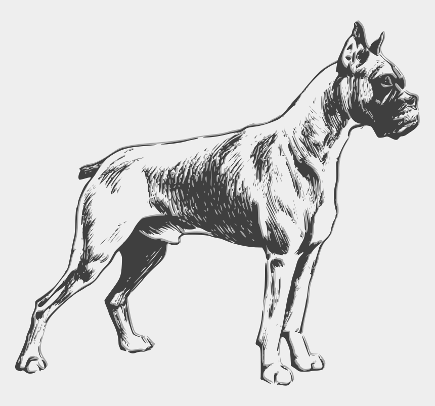 dog clipart black and white, Cartoons - Dog Clipart Black And White Png - Boxer Dog Drawing Outline