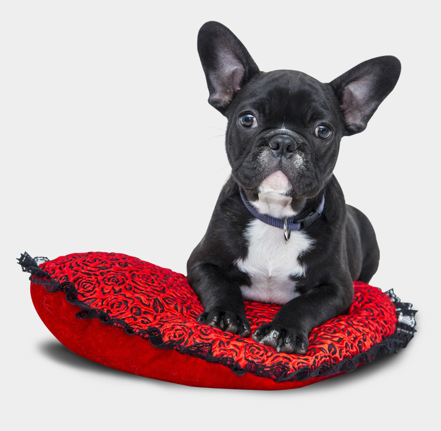 dog bed clipart, Cartoons - Dog - French Bulldog Transparent Background