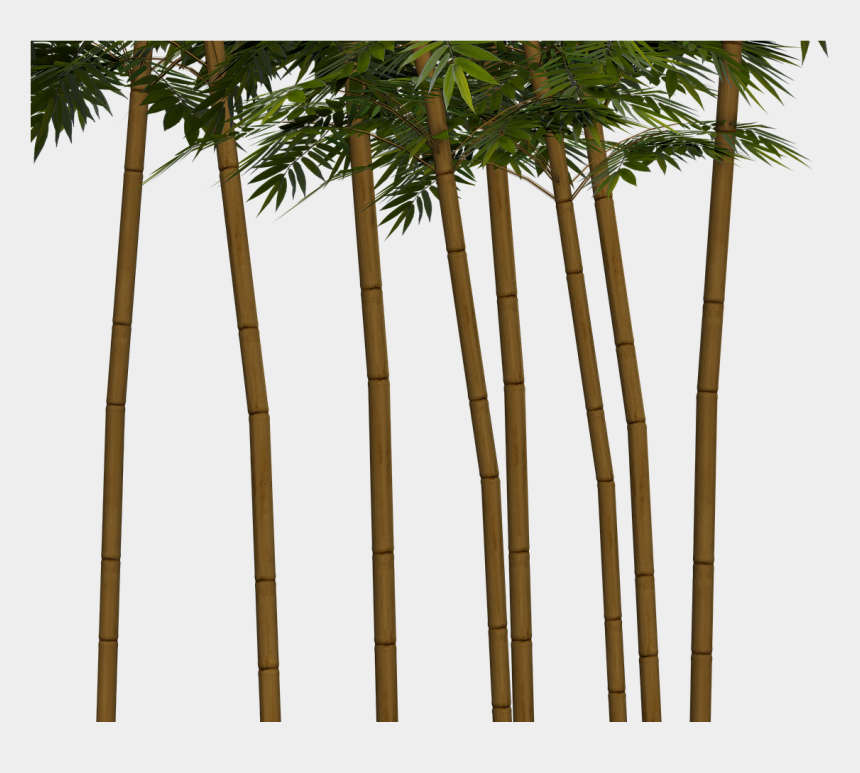 bamboo tree clipart, Cartoons - Bamboo Plant Wellness Png Image - Bamboo Trees Transparent